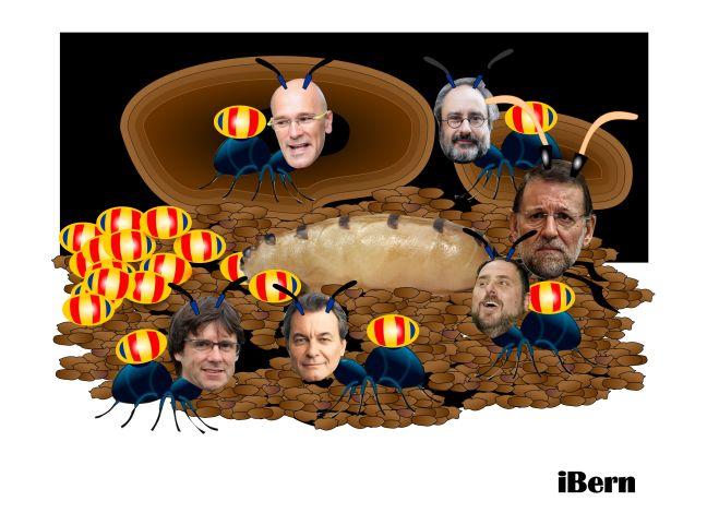 hormiga reina