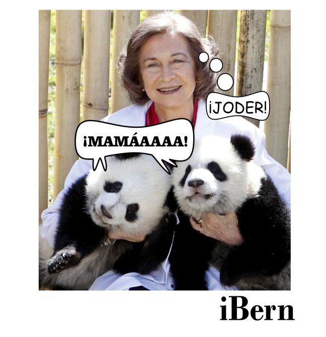 SOFÍA PANDAS